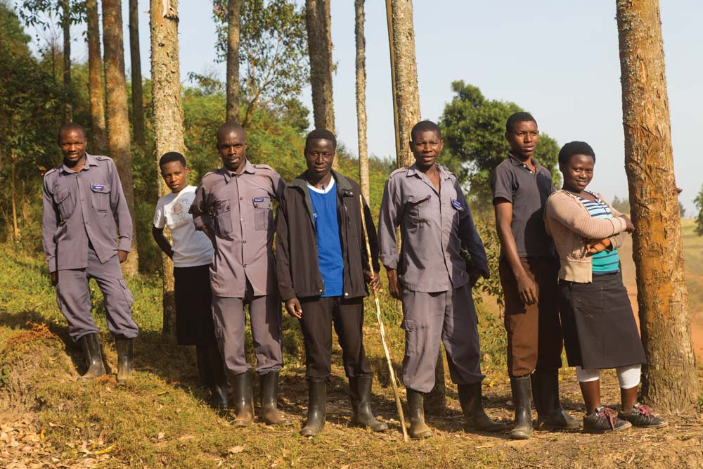 Teams of rangers track the animals in a bid to habituate. Eventually they get to know exactly when the gorillas and chimps are happy, sad, and playful